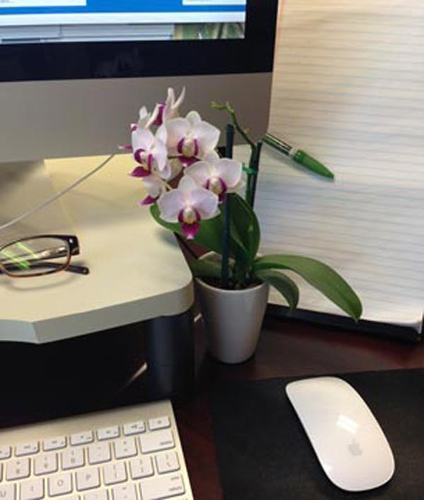 Office orchid