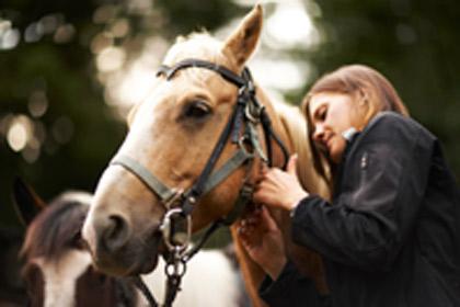 horse friend lg