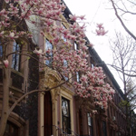 Brooklyn in the spring