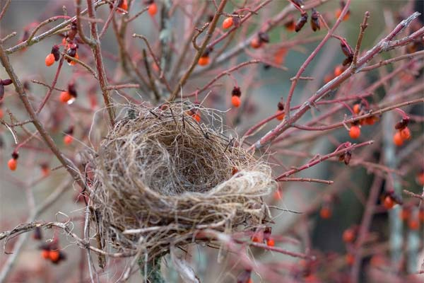 How to Cope With Your Empty Nest: 5 Tips for College Parents