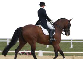 Colleges with Strength in Equestrian Studies
