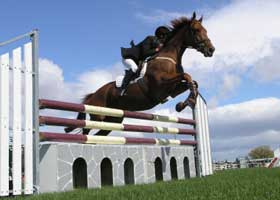 Colleges with Strength in Men's and Women's Equestrian Sports